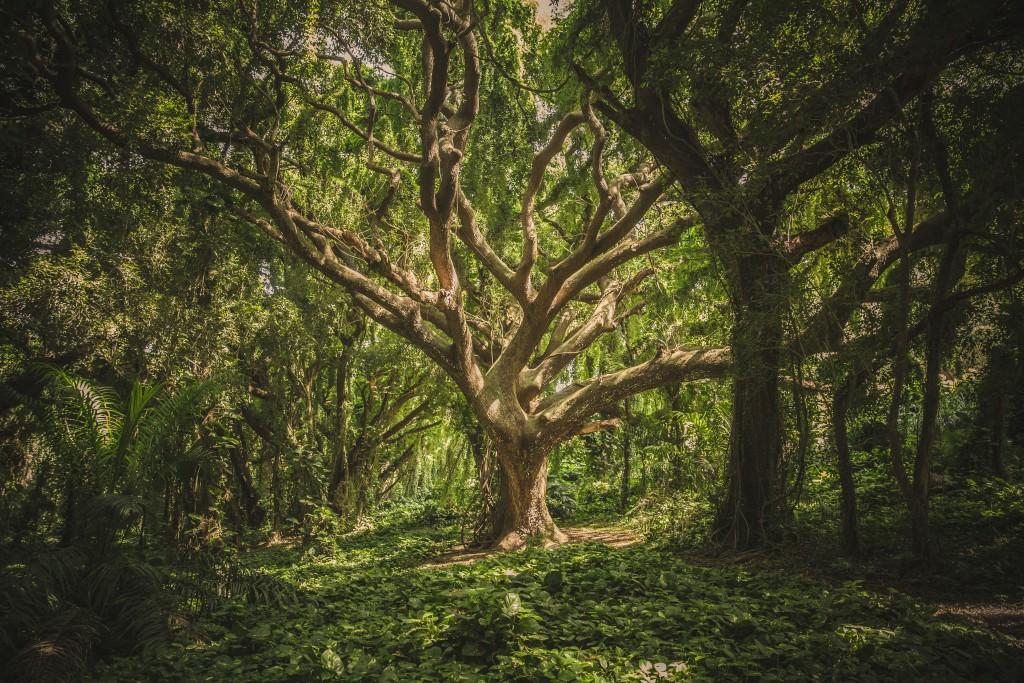 Holz: Massivholz